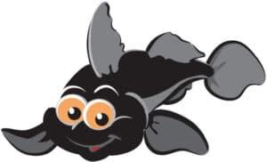 gobius fisk